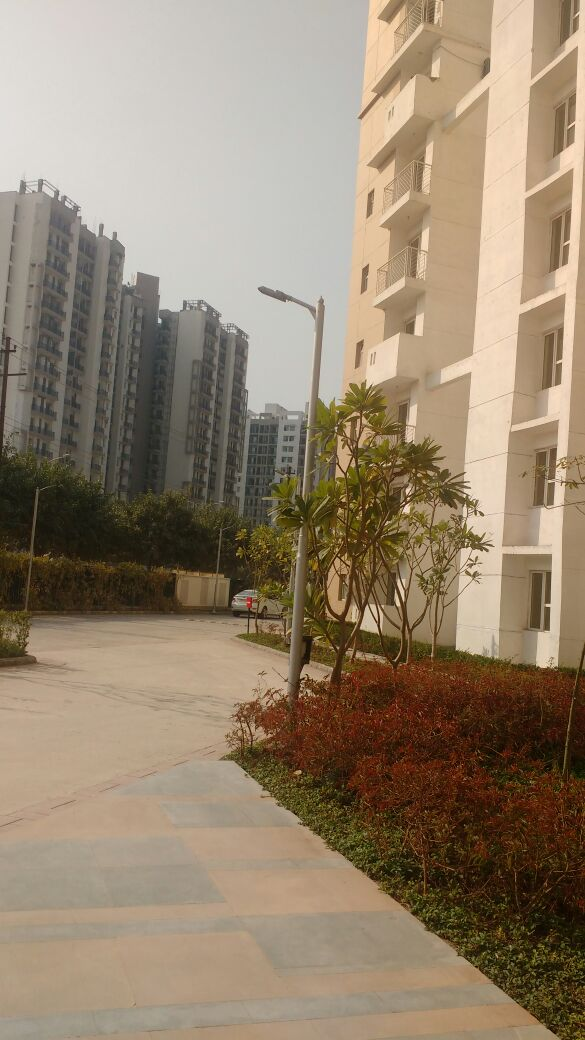 Property Management In Logix Bloosom Green Sector 143